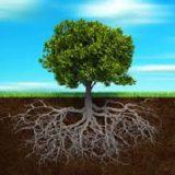 یک دقیقه برای یک عمر : ریشۀ درخت ۳