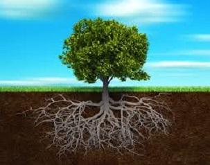 یک دقیقه برای یک عمر : ریشۀ درخت